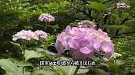 b16009n_jokeizi-1.jpg