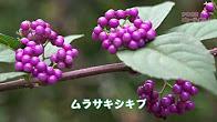 b16017a_satoyamanoaki