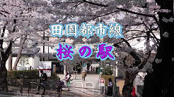 b18012s_sakuranoeki